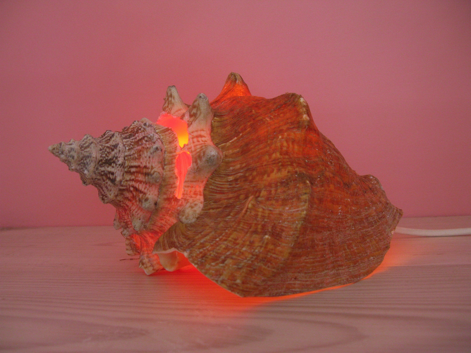 Hummer Conch, 2012